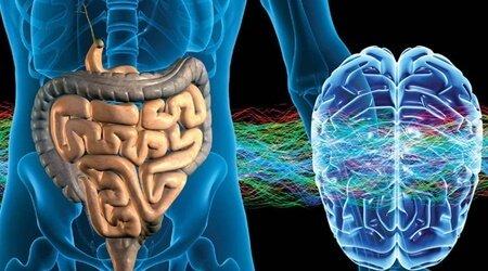 sistema-nervioso-enterico-segundo-cerebro