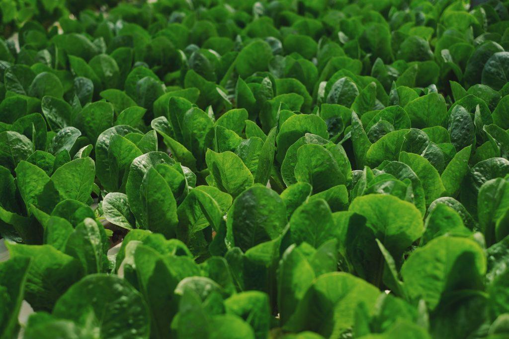 Alimentos para el cerebro, alimentos para el cerebro, super cerebro, alimentos para la salud del cerebro, alimentación, alimentos para ser más inteligente, alimentos para ser mas inteligente,